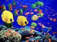 Багатий підводний світ червоного моря - фото з назвами риб