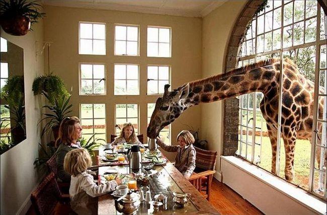 Бутік-готель giraffe manor, найробі, кенія