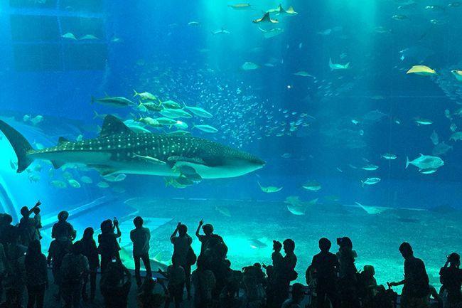 Ціни на Окінаві, Японія: океанаріум Тюраумі.