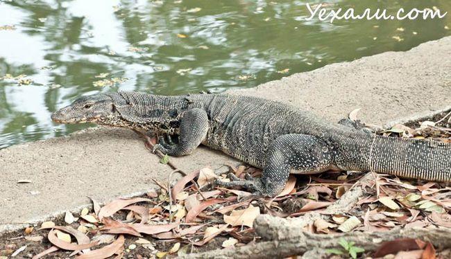 Куди сходити в Бангкоку: парк Люмпіні