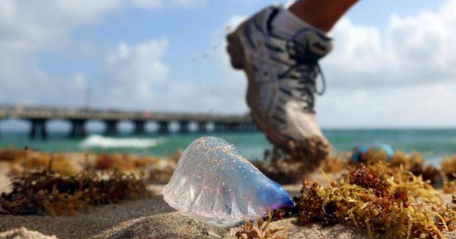 Якщо ви побачили таку штуку на пляжі, не торкайтеся до неї !!