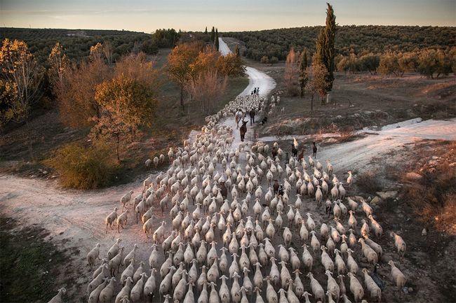 Фіналісти екологічного фотоконкурсу atkins ciwem environmental photographer of the year 2016