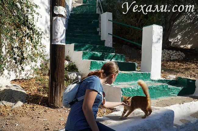 Фото острова Гідра, кішки