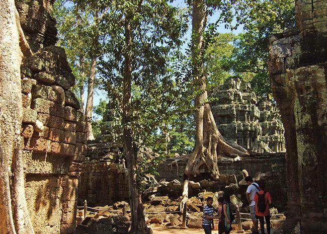 Храм Та Прохм в Камбоджі (храмовий комплекс Ангкор).