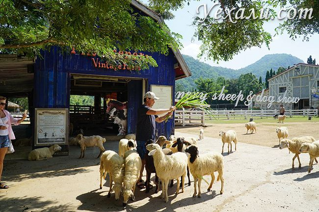Екскурсія Земля Королів і Альпака Парк, овеча ферма