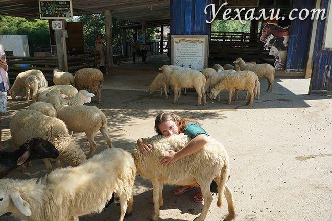 Ферма овечок в Таїланді