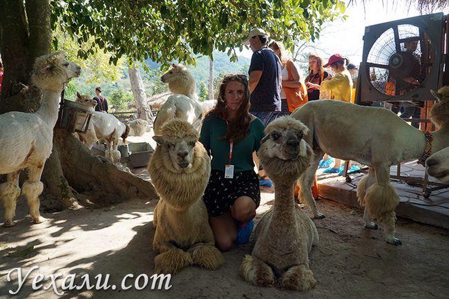 Екскурсія Земля Королів і Альпака Парк в Паттайя