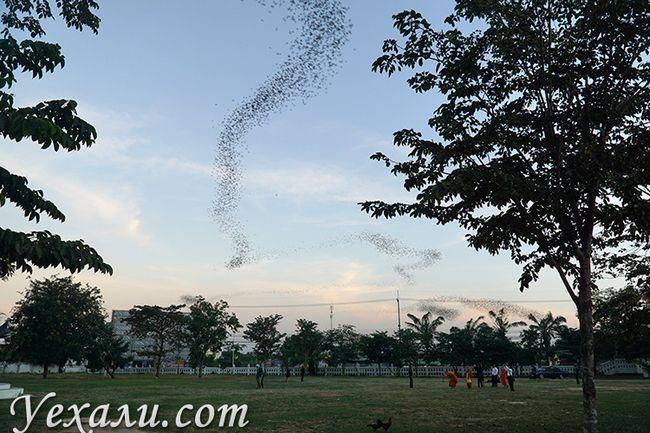 Храм кажанів в Таїланді