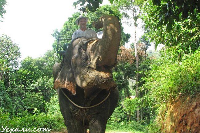 Відпочинок в Паттайя: катання на слонах