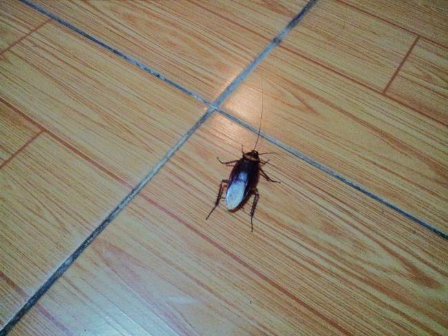 комахи в готелі, В`єтнам