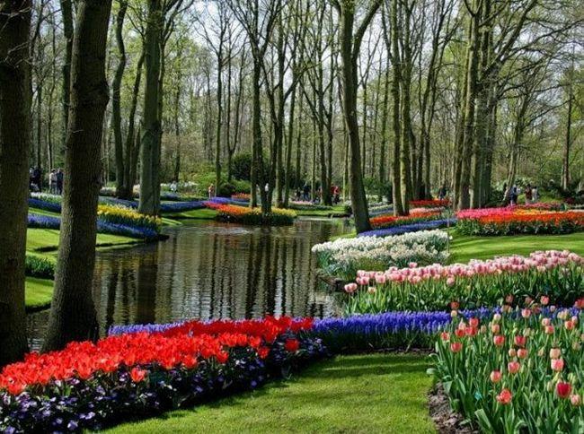Кекенхоф (keukenhof) - королівський парк квітів у нідерландах