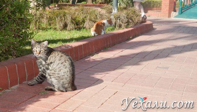 Фото Аланії: турецькі кішки