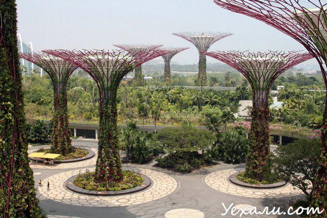Фото Ботанічних садів в Сінгапурі