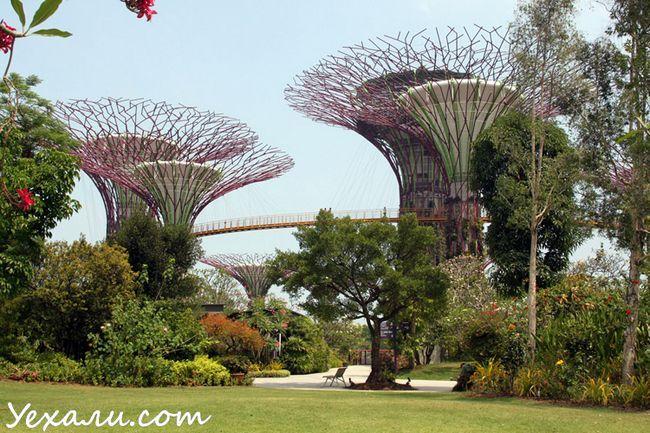 Сади у Затоки в Сінгапурі, фото
