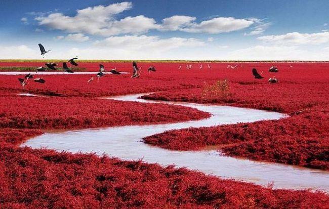 Червоний пляж паньцзінь (panjin red beach), китай