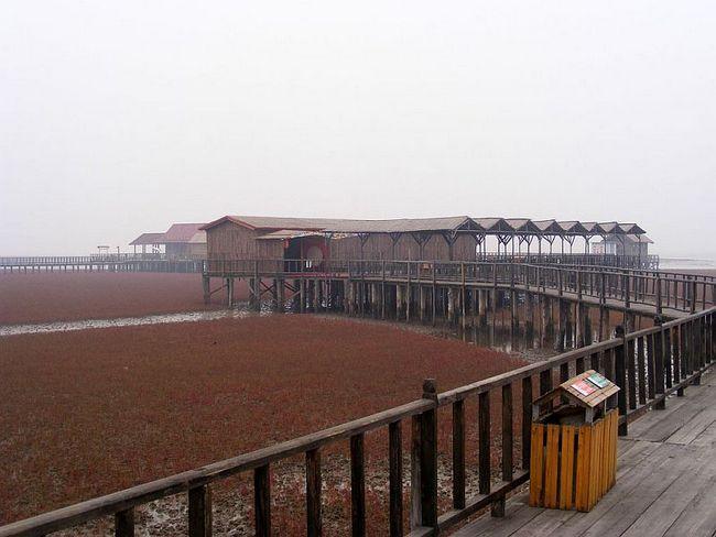 Червоний пляж Паньцзинь (Panjin Red Beach), Китай