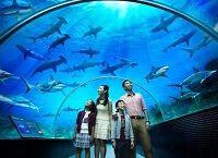 Красу підводного світу на суші - найбільші океанаріум в світі