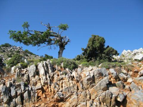 Крит: авто і екскурсії, море і пляжі !!!
