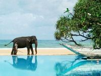 Кращі готелі шрі-ланки 3, 4, 5 зірок: все включено, хороші пляжі і аюрведа в комплекті!