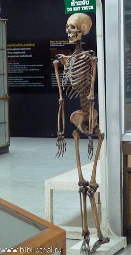 Музей смерті в бангкоку