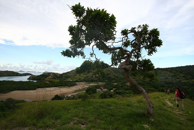Комодо - острів драконів