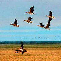 Національні парки африки співпрацюють з російським заповідником