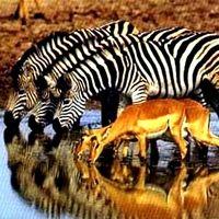 Національні парки африки