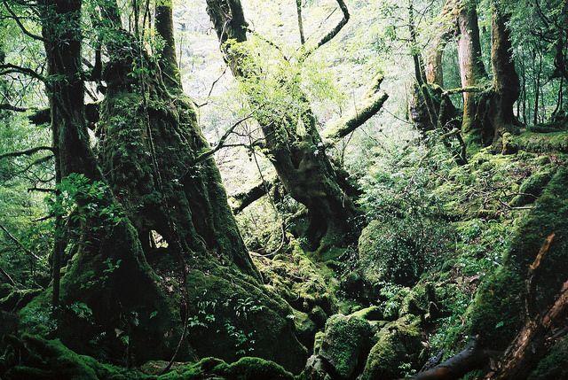 Якусіма - острів первозданних лісів