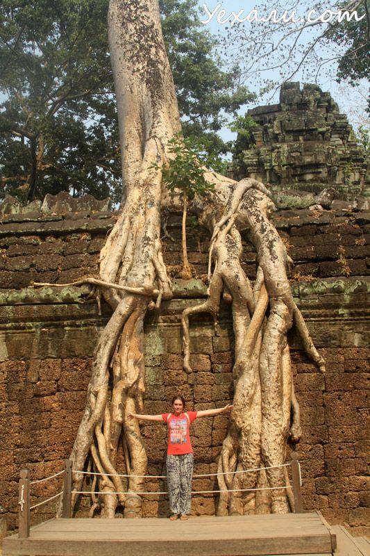 Дерева в Ангкор Ваті