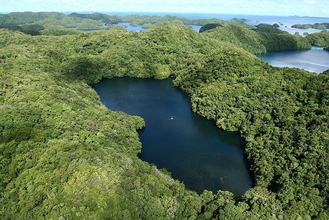 Озеро Медуз (Jellyfish Lake), Палау