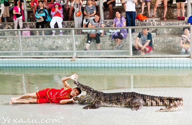 Шоу з крокодилами в Паттайя