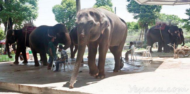 Парк мільйонорічних каменів в Паттайя: слони
