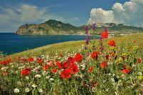 Погода в криму в липні: яскраве сонце, спокійне море
