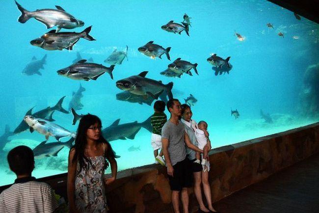 Річкове сафарі (river safari) парк дикої природи в сінгапурі