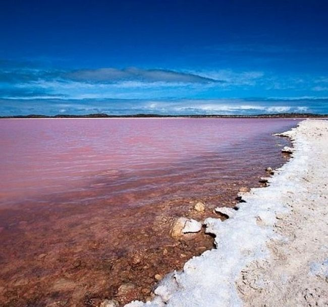 Рожеве озеро Хіллер (Hillier), Австралія