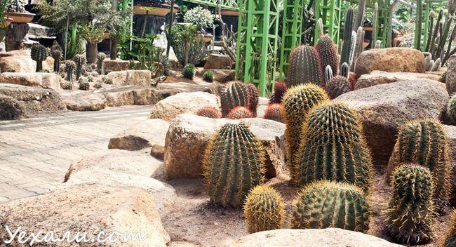Тропічний парк Нонг Нуч в Паттайя
