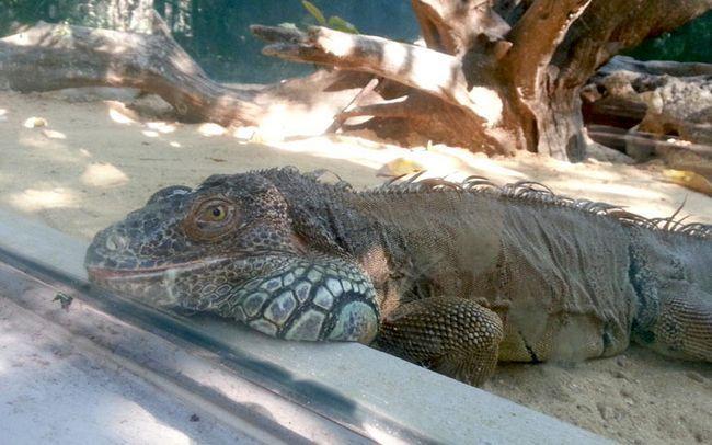 Сафарі-парк, Бангкок (Safafi World): рептилії