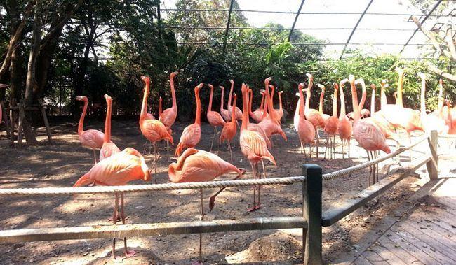 Сафарі парк в Бангкоку: рожеві фламінго