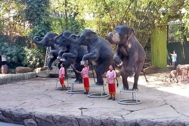 Сафарі парк в Бангкоку: шоу слонів