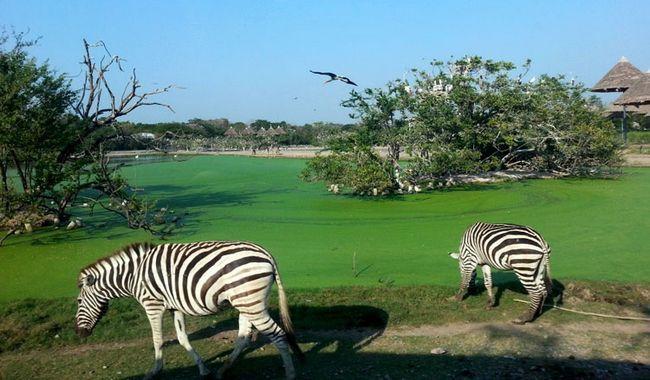 Сафарі парк в Бангкоку (Safafi World)
