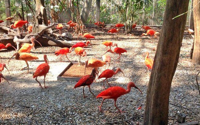 Сафарі парк в Бангкоку Safafi World: ібіси