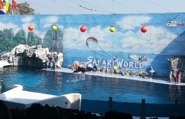 Сафарі парк в Бангкоку: шоу дельфінів