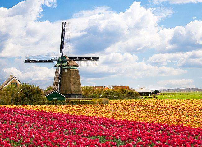 Найкрасивіші квіткові долини світу
