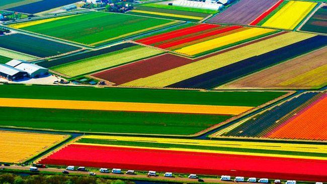 одне з красиві місць в світі: Поля тюльпанів