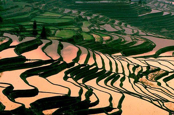 тераси Юньнань