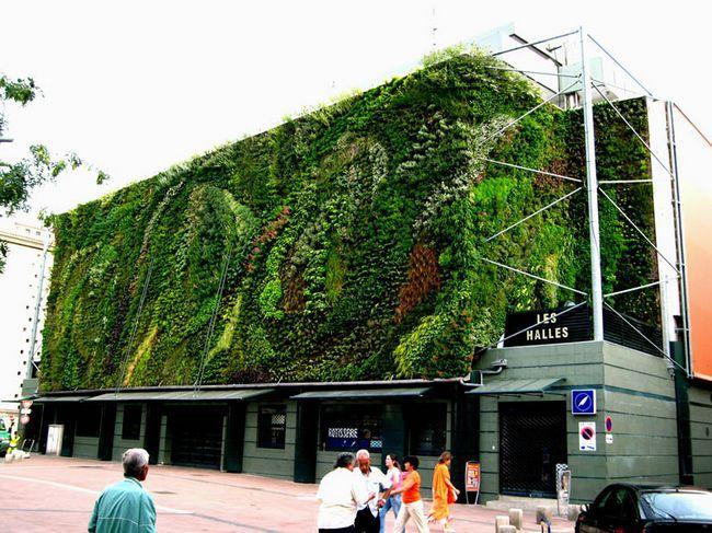 Найкрасивіші вертикальні сади