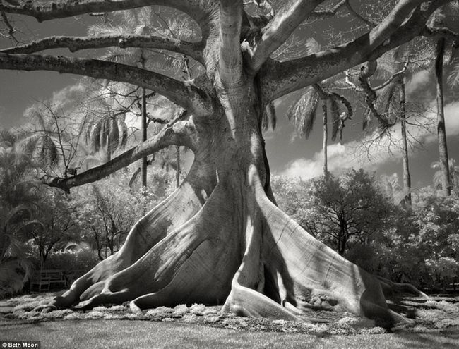 Найстаріші дерева світу: гіганти, яким хочеться вклонитися