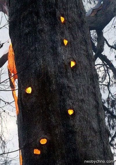 Найстаріші дерева на землі. Топ 6