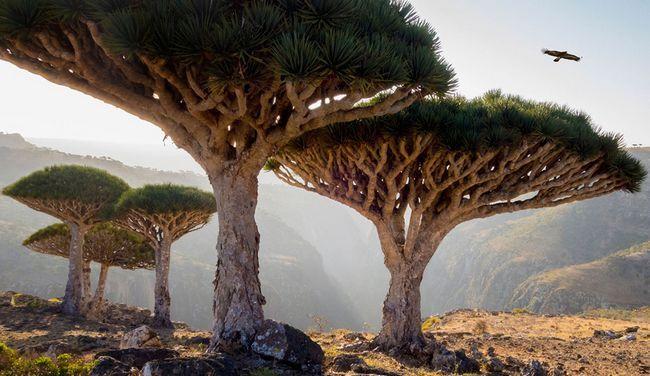 Найбільш вражаючі пам`ятники природи зі списку юнеско