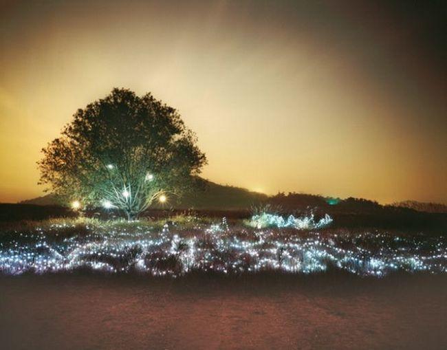 Світлова інсталяція «зоряна ніч» від фотографа чи юніеол